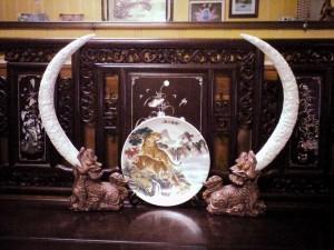 Theo phong thủy, mỗi vị trí đặt đôi ngà voi mang lại những ý nghĩa riêng