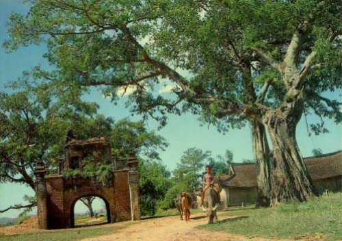Cây đa thường có ở đền thờ miếu mạo.