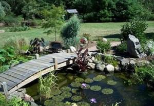 phong thủy bể nước trong sân vườn