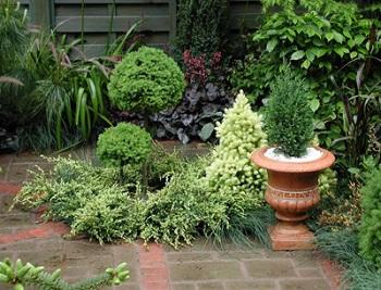 lưu ý phong thủy khi trồng cây trong sân vườn