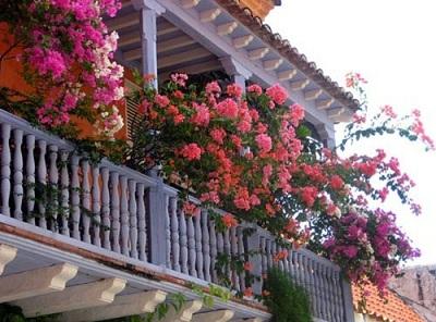 Hóa giải phong thủy xấu cho nhà ở bằng hoa trên ban công