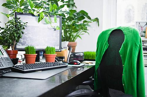Không nên đặt quá nhiều cây xanh trên bàn làm việc