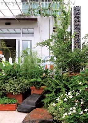 Chọn cây gì cho khu vườn góc cạnh nhà gia chủ mệnh hỏa?