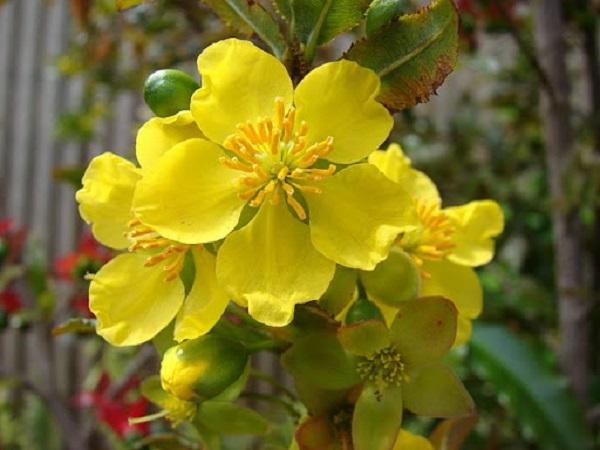 Mơ thấy hoa màu vàng điềm báo gì?